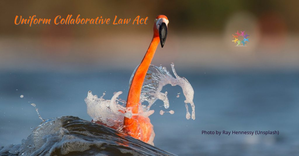 American Flamingo on Water with Waves. Photo by Ray Hennessy Unsplash