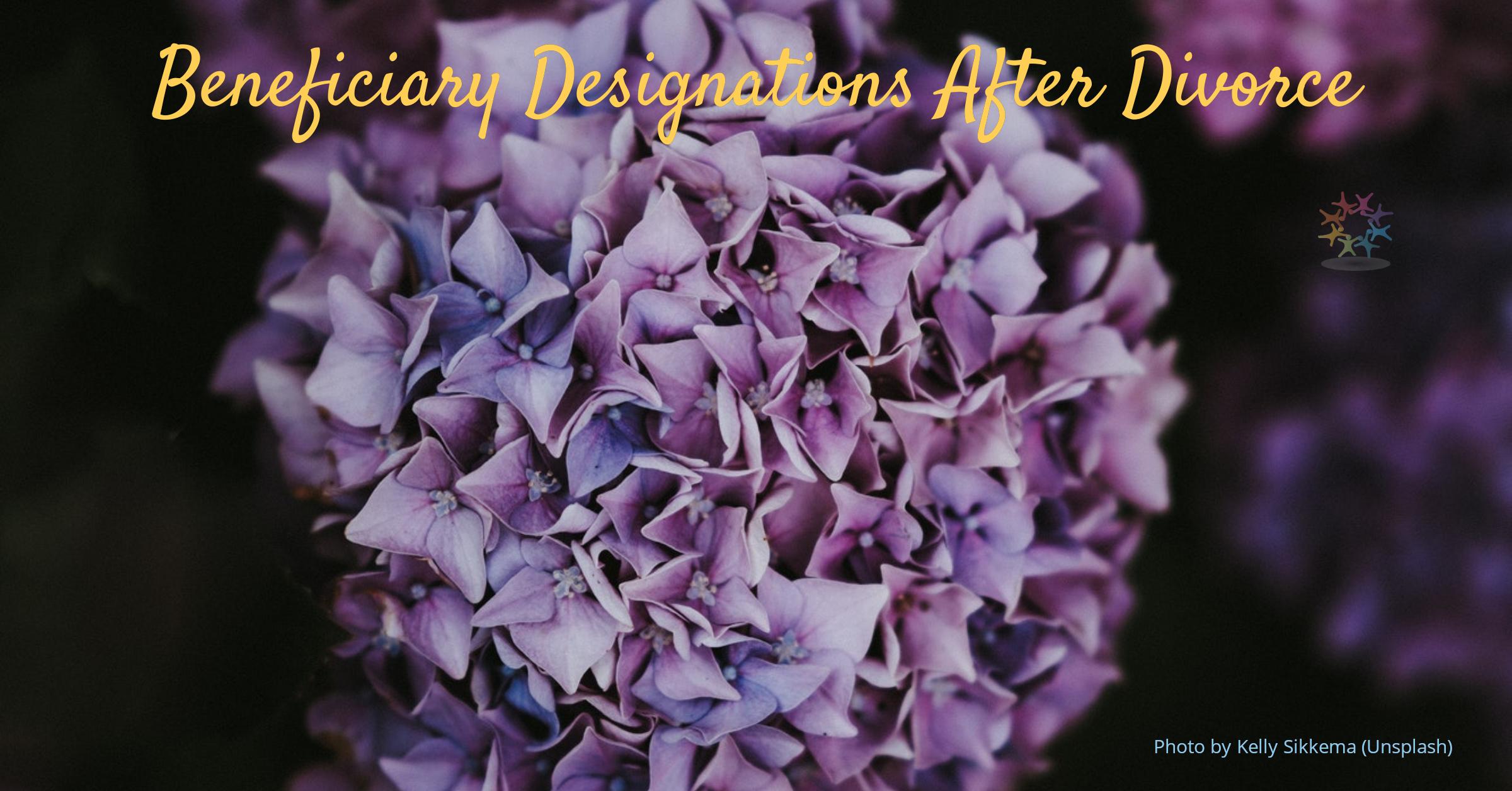 Fall purple hydrangeas